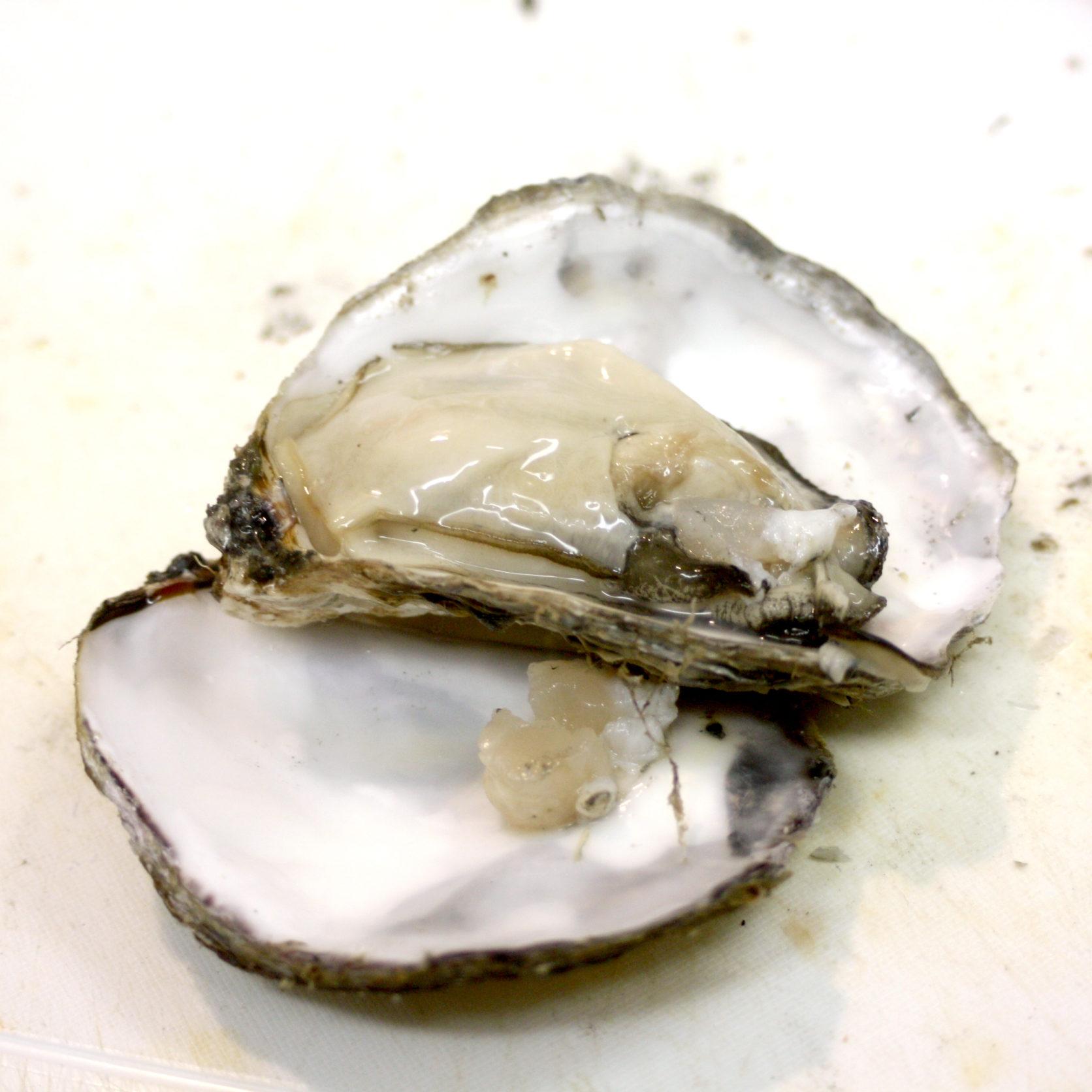 サルサソースでいただく。生牡蠣のカルパッチョレシピ